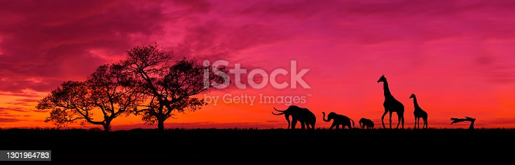 Amazing sunset and sunrise.Panorama silhouette tree in africa with sunset.Safari theme.Giraffes , Lion , Rhino.