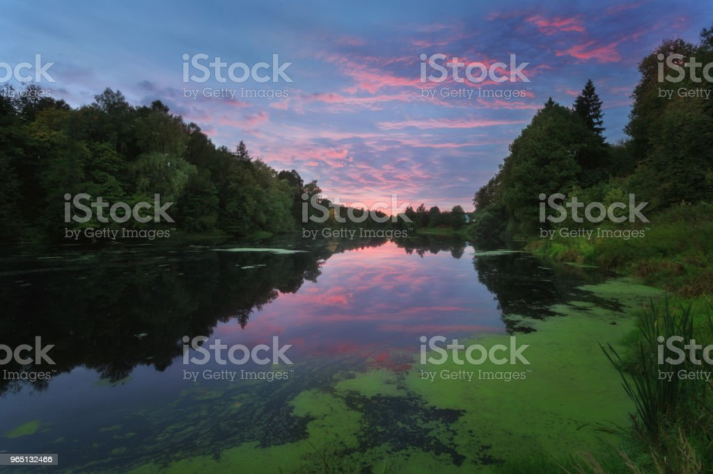 Amazing sunset in the beautiful place on the river Ucha. The green duckweed washed ashore. Bushes and trees. Pink clouds on the blue sky. Marfino Estate royalty-free stock photo