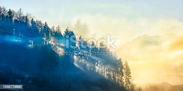 horizontal nature background of forest in the sunset time.
