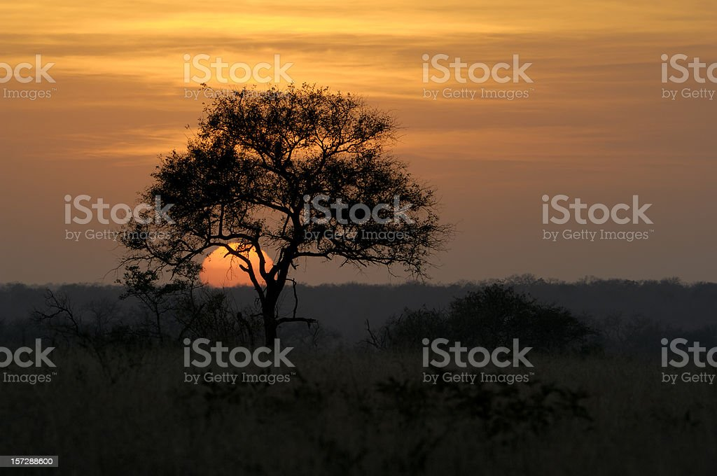 Amazing sunset under a tree in Africa royalty-free stock photo