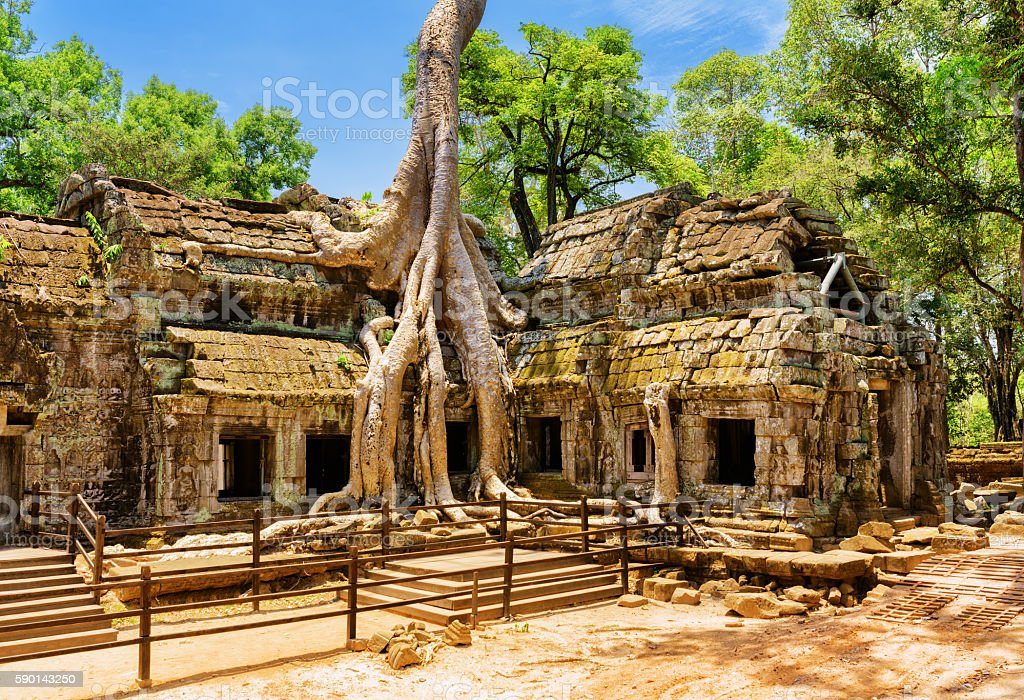 Amazing Ta Prohm temple overgrown with trees in Angkor, Cambodia stock photo
