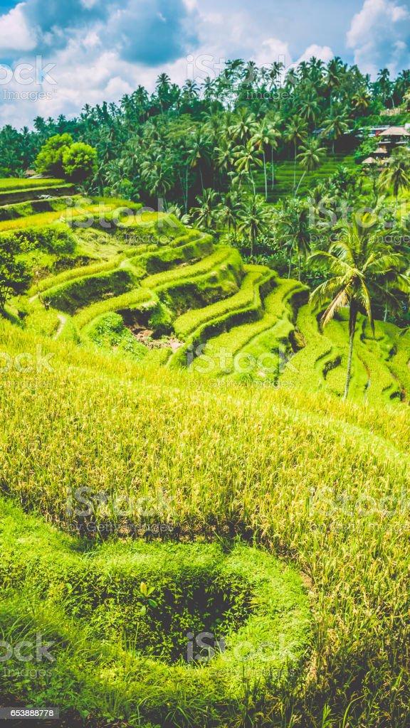 Amazing Tegalalang Rice Terraces on Morning Sun Light, Ubud, Bali, Indonesia stock photo