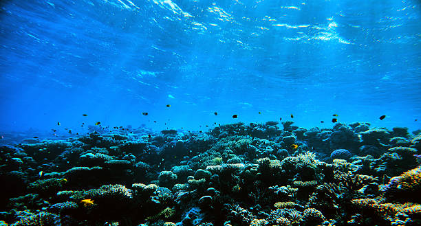 amazing underwater with tropical fishes - ocean floor stock photos and pictures