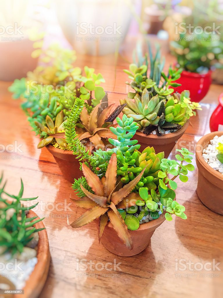 Amazing vessels full of succulents on the indoor garden. royalty-free stock photo