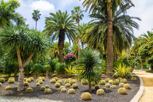 herrliche aussicht auf kaktus parkanlage in garcia sanabria park. ort: kakteengarten in santa cruz de tenerife, teneriffa, kanarische inseln. künstlerischen bild. beauty-welt. - palmengarten stock-fotos und bilder