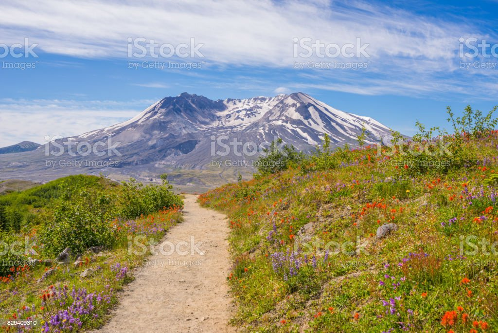 Amazing view of flowers and hills near big volcano along a fascinating Harry's Ridge Trail. stock photo