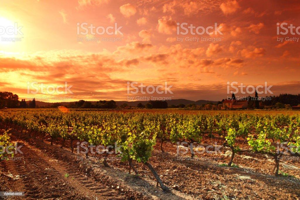 Amazing Vineyard Sunset stock photo