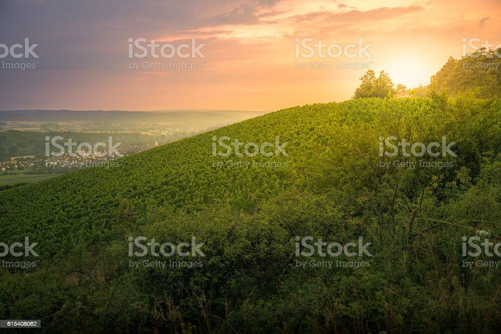 Amazing Vineyard with sunlight stock photo