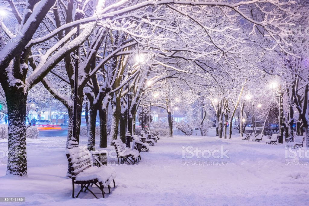 Amazing winter night landscape of snow covered bench among snowy trees and shining lights during the snowfall. Artistic picture. Beauty world. stock photo