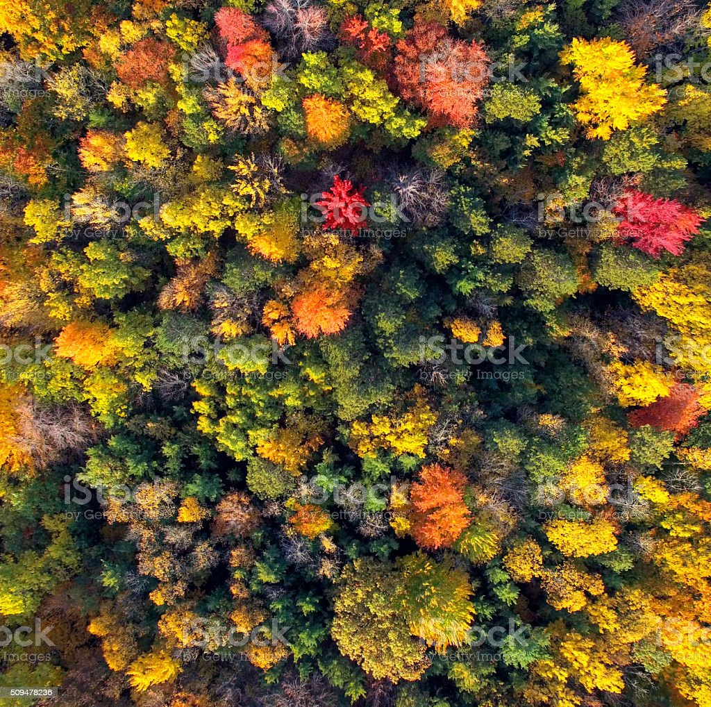 Amazingly Colorful Wisconsin Autumn Forests, Aerial View stock photo