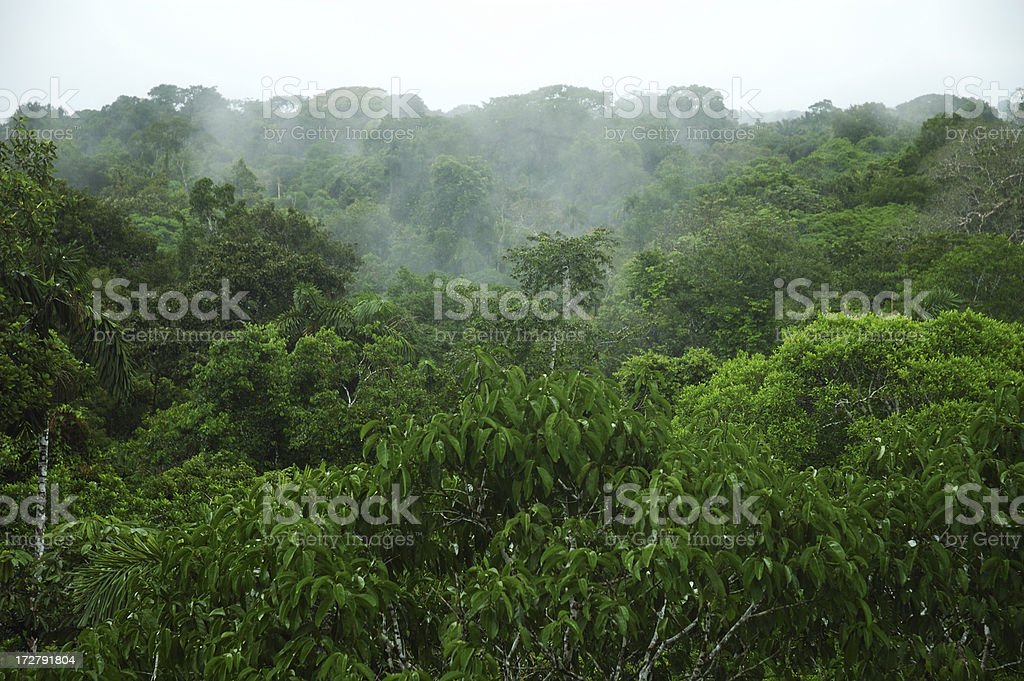 Amazon Canopy stock photo