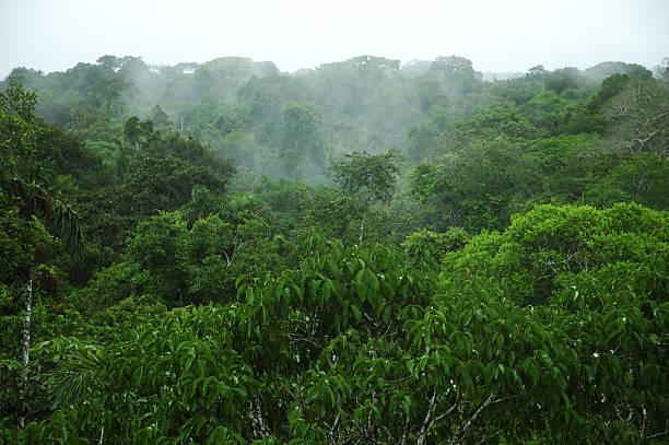 Pabellón de Amazon - foto de stock