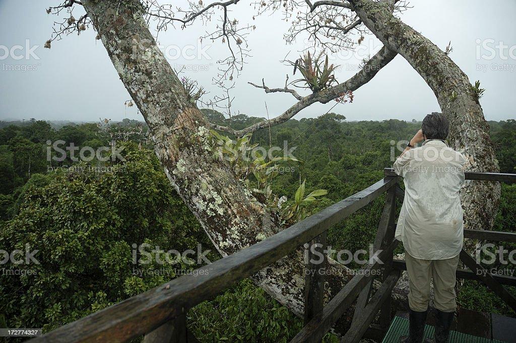 Amazon Canopy Viewpoint stock photo