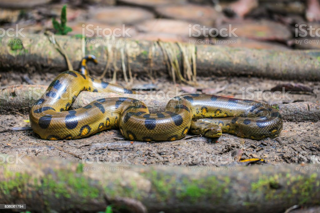 Amazon creatures – zdjęcie
