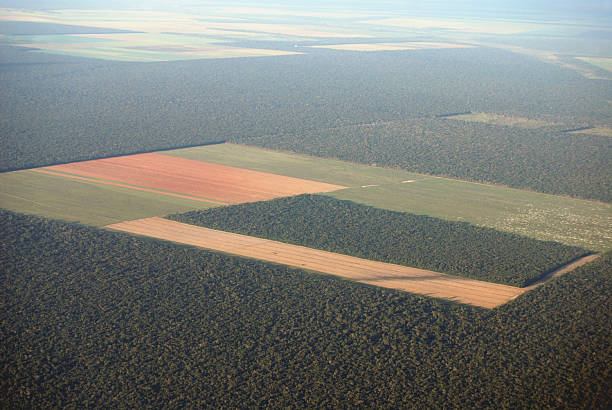 Amazon deforestation from the air  deforestation stock pictures, royalty-free photos & images