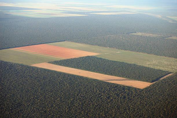 amazon deforestación desde el aire - deforestacion fotografías e imágenes de stock