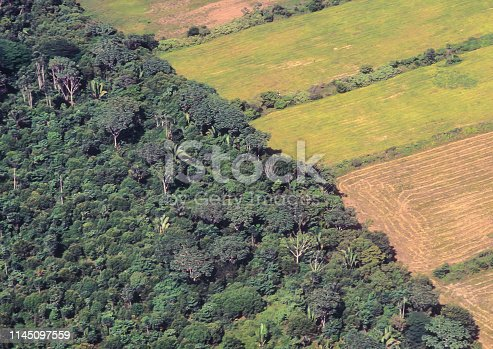 Soya farm field besides the original forest of the Amazon