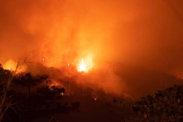 Amazon forest fire disaster problem.Fire burns trees in the mountain at night. stock photo