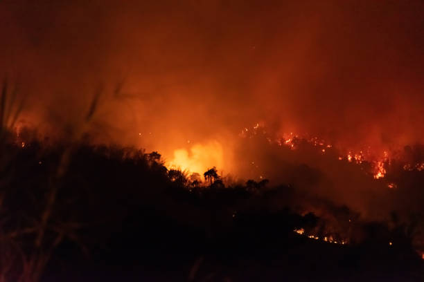 Amazon forest fire disater problem.Fire burns trees in the mountain at night. stock photo