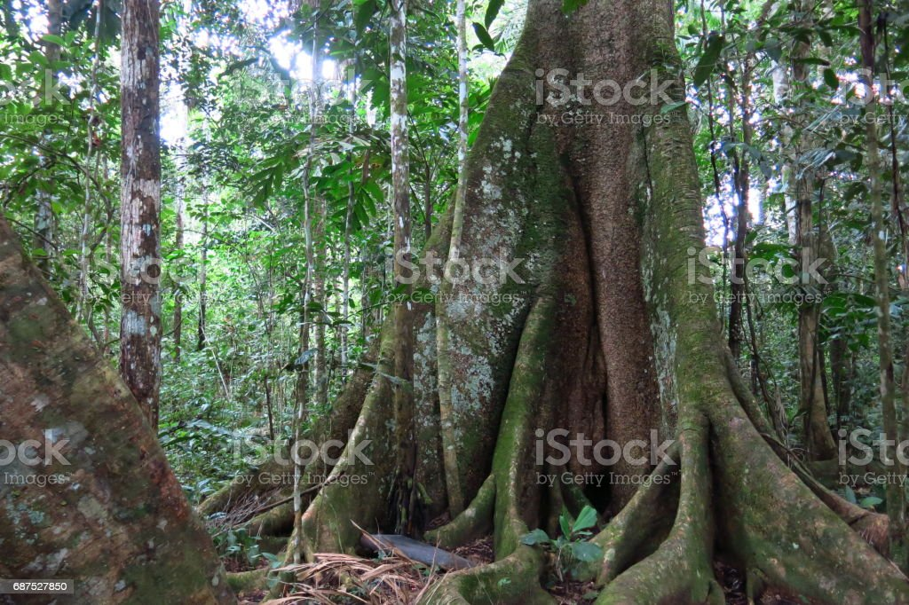 Amazon forest in the Madidi National Park, Bolivia stock photo
