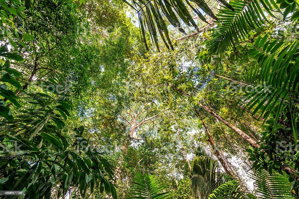 Amazon Jungle Canopy stock photo