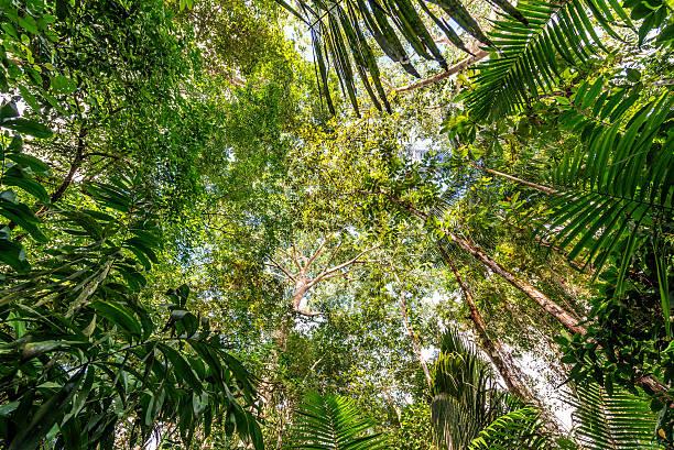 Selva amazónica - foto de stock