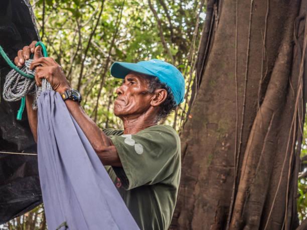 jungle amazonienne - sternum photos et images de collection