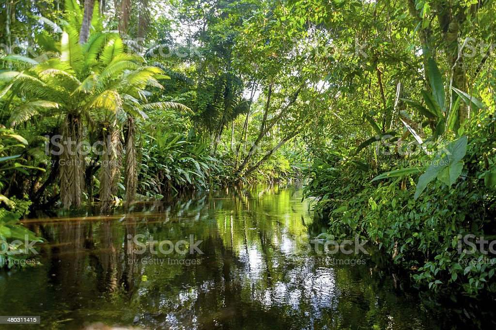 Amazon Jungle stock photo