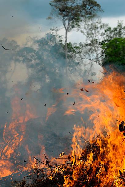 amazon on fire burning the amazon rainforest amazon region stock pictures, royalty-free photos & images
