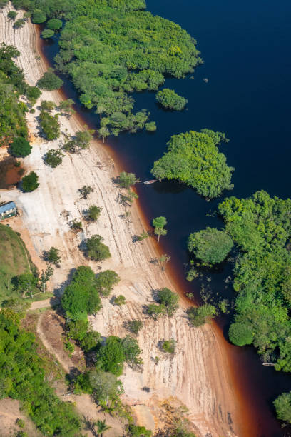 Amazon Typical Amazon beach (at the border of a river) rio negro brazil stock pictures, royalty-free photos & images