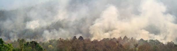 AmazonRegenwaldbrand-Katastrophe brennt in einer Geschwindigkeit, die Wissenschaftler noch nie zuvor gesehen haben. – Foto