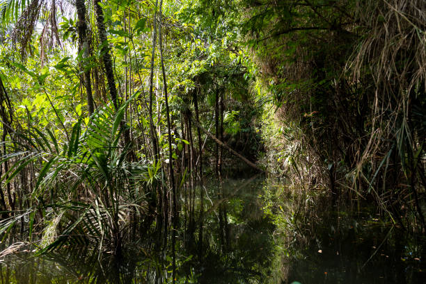 Amazon rainforest area in the state of Pará, on the banks of the Tapajós River stock photo