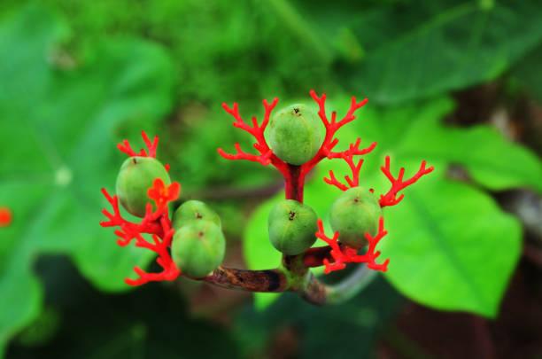 Amazon rainforest berry close up stock photo