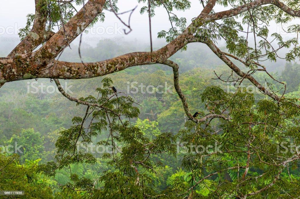 Torre de observação da floresta amazônica no Equador - foto de acervo