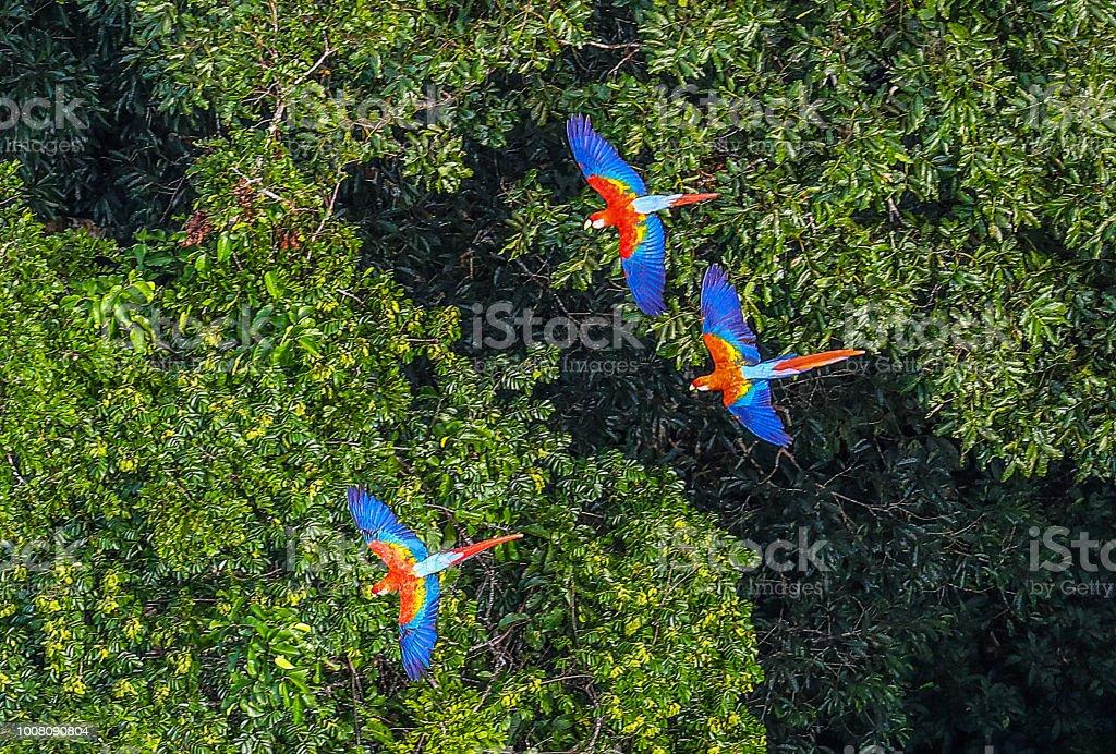 Amazon Rainforest - Royalty-free Amazon Rainforest Stock Photo