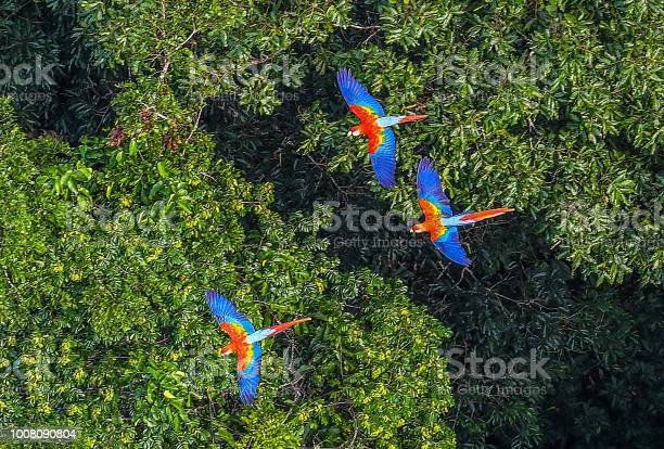 Amazon rainforest picture id1008090804?b=1&k=6&m=1008090804&s=612x612&h=  t5audohfe9cfdmbsbdfvedr20rlk0q6lmsopv 5ry=