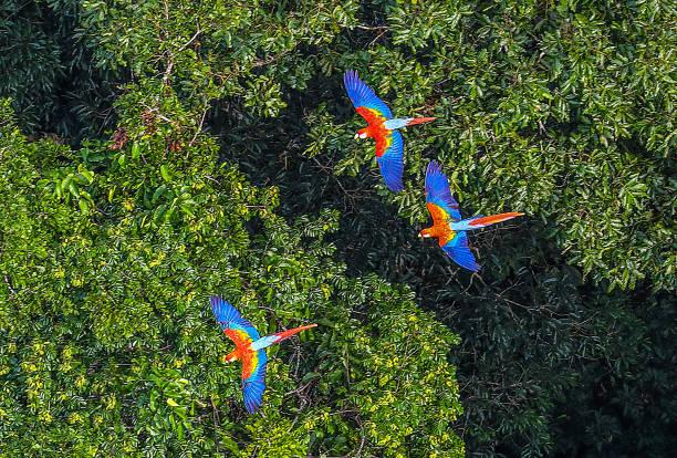 Floresta amazônica - foto de acervo