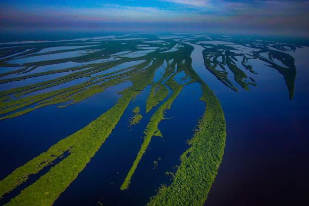 Amazon Rainforest River in the Amazon Rainforest. amazon rainforest stock pictures, royalty-free photos & images