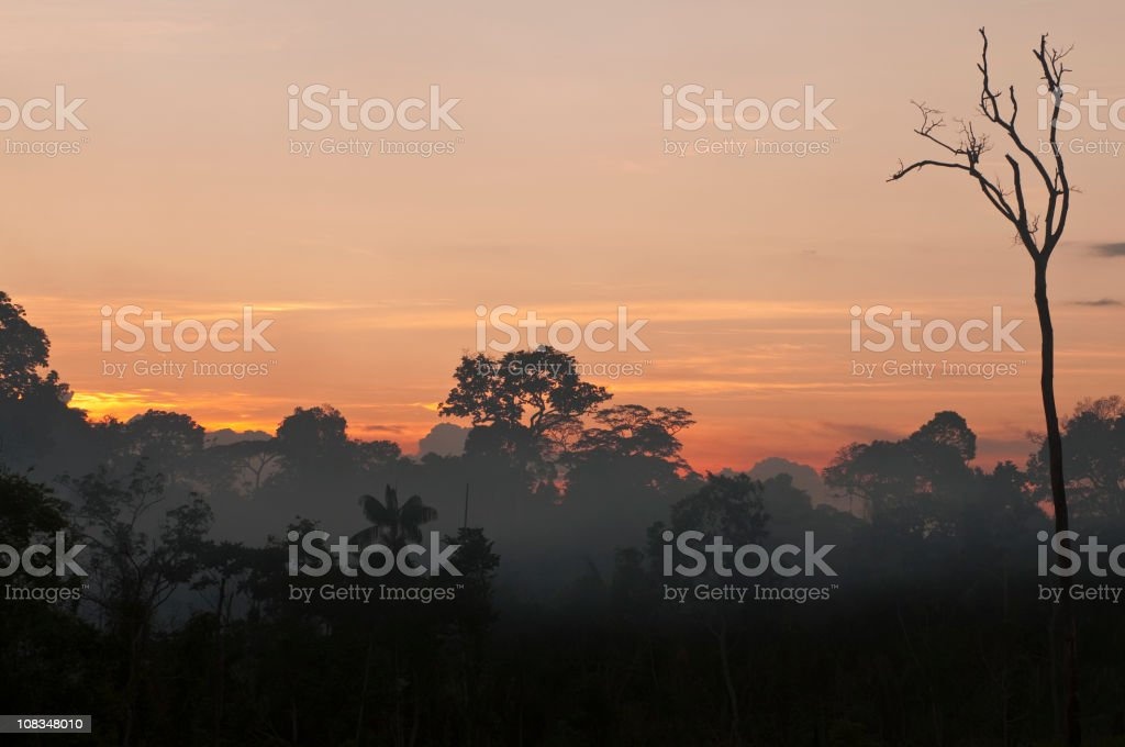 Amazon rainforest royalty-free stock photo
