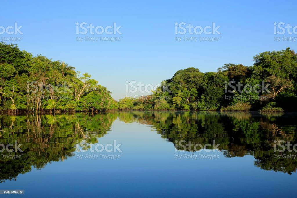 Amazon Rainforest - foto stock