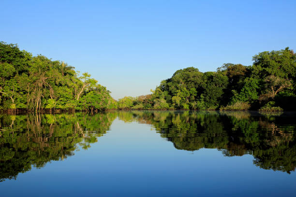 Amazon Rainforest Amazon Rainforest amazon region stock pictures, royalty-free photos & images