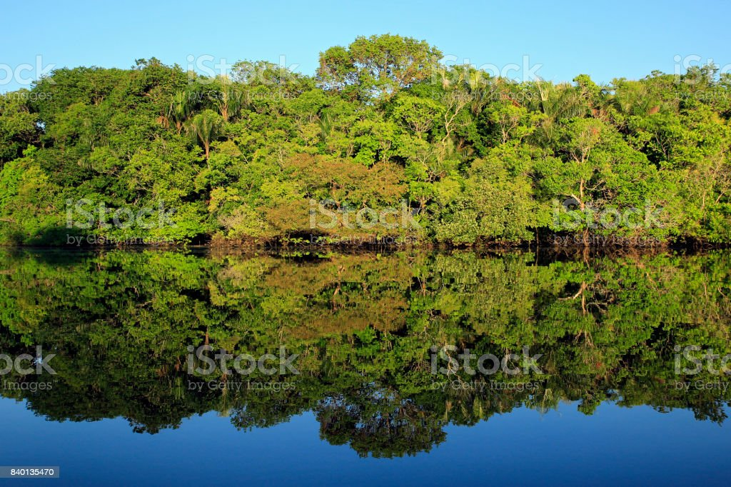 Amazonas regnskog bildbanksfoto