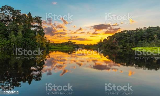 Amazon rainforest sunset panorama picture id1255309715?b=1&k=6&m=1255309715&s=612x612&h=mkx3jndmwexs9yrpdprnh67j ycuisuwydbidtmg2es=