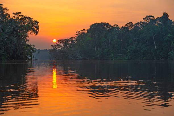 reflexão do por do sol da floresta amazônica - laguna - fotografias e filmes do acervo