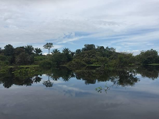 Amazon reflecting