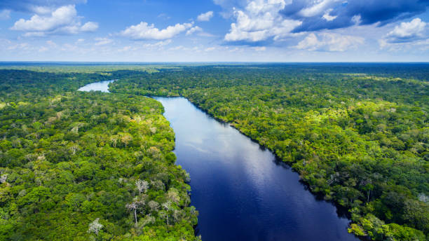 amazon river in brazil - river stock pictures, royalty-free photos & images