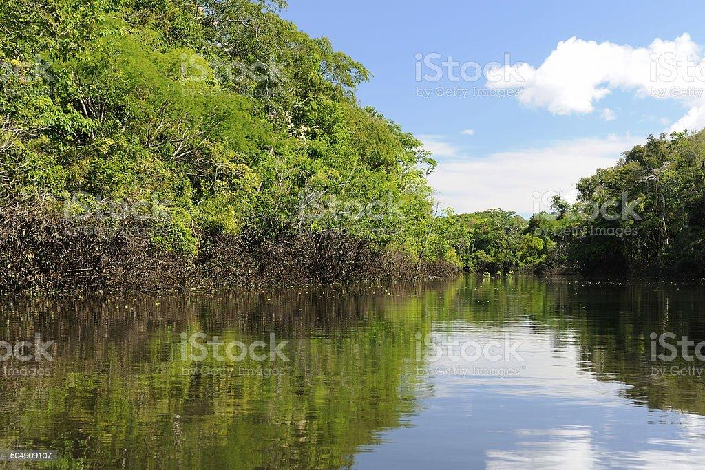 Amazon river landscape in Colombia stock photo