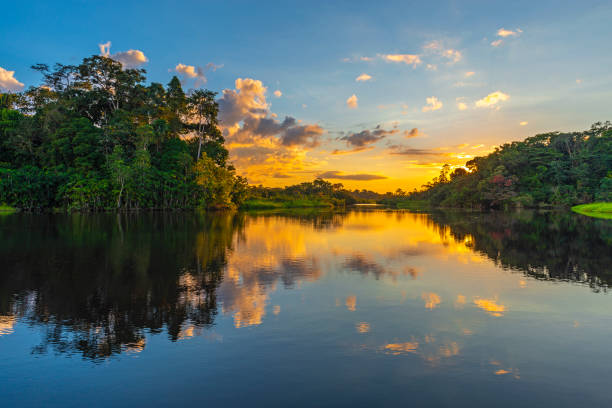 Amazon River Sunset Reflection of a sunset by a lagoon inside the Amazon Rainforest Basin. The Amazon river basin comprises the countries of Brazil, Bolivia, Colombia, Ecuador, Guyana, Suriname, Peru and Venezuela. amazon river stock pictures, royalty-free photos & images