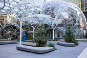 Amazon headquarters building, located in downtown Seattle, is a growing campus with a significant feature.  The Spheres are situated in between the two corporate towers, and feature an atrium with hundreds of exotic plants.