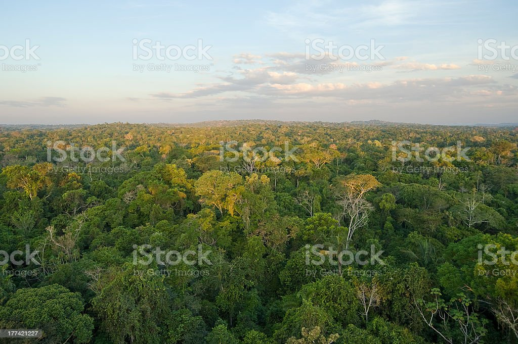 Amazon tropical rain forest Aerial vew of the Amazon Tropical Rainforest. Amazon Rainforest Stock Photo